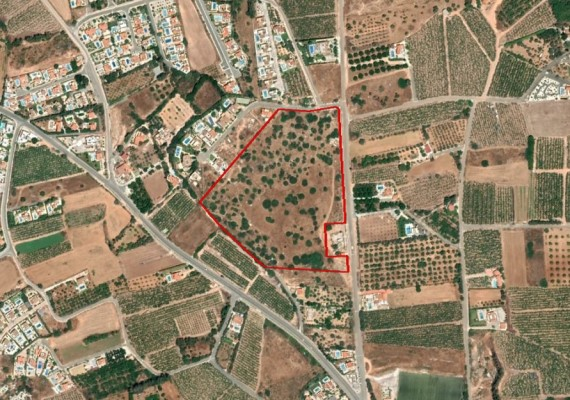 Share of Field in Pegeia, Paphos