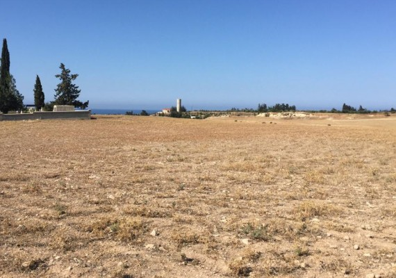 Field in Timi, Paphos